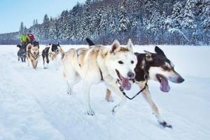 Dog Sledding Tour From Toronto Packages
