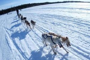 Yellowknife Dog Sledding Tour Packages