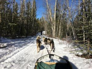Half-day Dog Sledding: The Takhini Express Packages